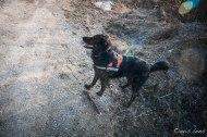 kira and her stick