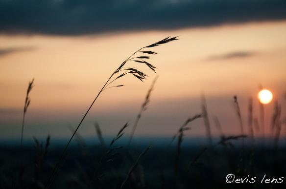 summer-3