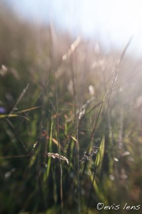 summer-9
