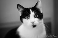 cats-20