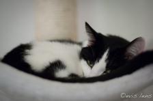 cats-23