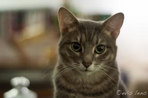 cats-42